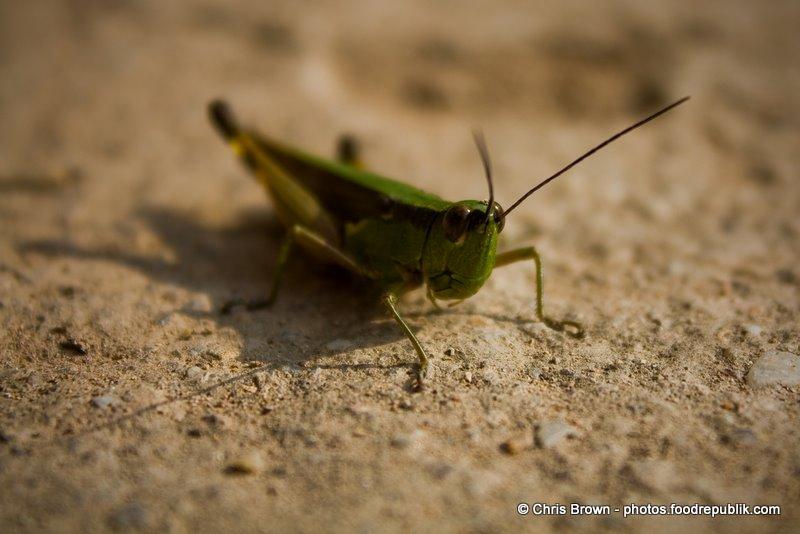 Grasshopper Close