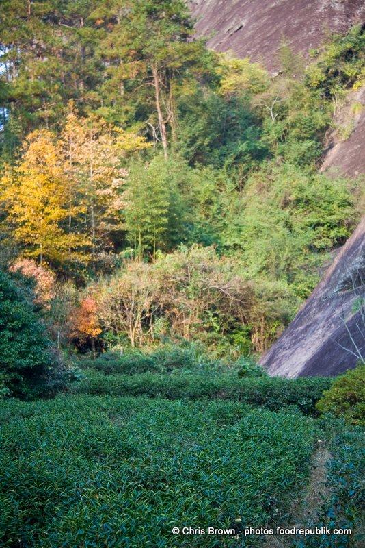 Tea Canyon