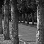 Tree Lined Street - Potsdam