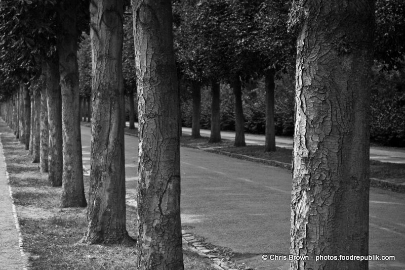 Tree Lined Street BW