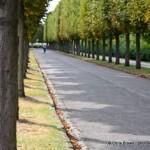 Trees Along the Road - Potsdam, Germany